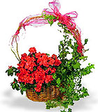 Azalea and Ivy Gift Garden - by Avante Gardens Florals Unique