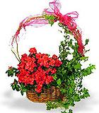 Azalea and Ivy Gift Garden - by Avante Gardens Florals Unique