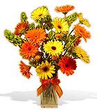 Gerbera Festival Vase - by Avante Gardens Florals Unique