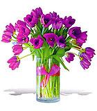 Passionate Purple Tulips - Premium