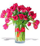 Precious Hot Pink Tulips - Premium