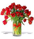 Radiantly Red Tulips - Premium