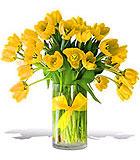 Sunny Yellow Tulips - Premium