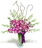 Premier Orchid Vase Arrangement