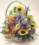 Sweet Bear in a Basket