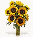 Shining Sunflowers Vase