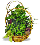 Woodsy Planted Basket