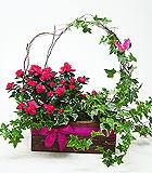Mother's Day Azalea & Ivy Garden