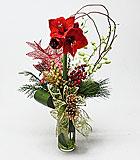 Christmas Amaryllis Delight by Anaheim Florist: Avante Gardens