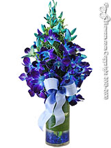 Stem Dyed Blue Orchids With blue gems placed inside of a cylinder glass vase with matching ribbon.
