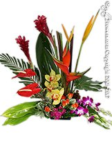 Tropical Punch Avante Gardens by Everyday Flowers