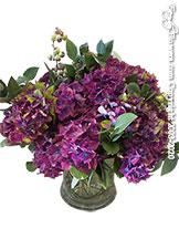 Oregon Summer Berries - Plum Hydrangea