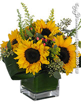 Just Sunflowers