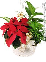 Poinsettia Garden Plant Basket For Christmas