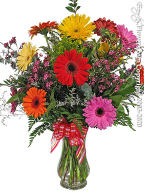 Gerbera Garden Same Day Flower Delivery by Avante Gardens