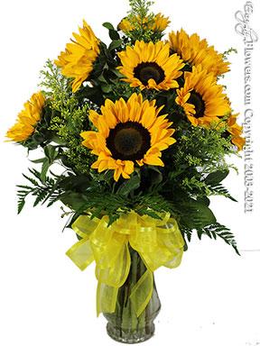 Dozen Sunflowers