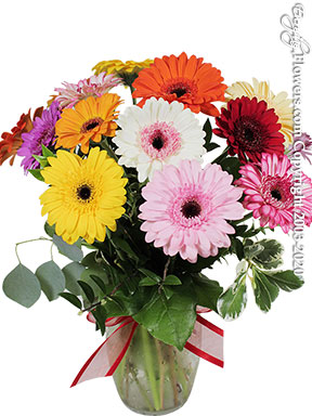 Mini Gerbera Daises delivery by Avante Gardens Florist