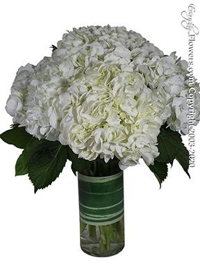 White Hydrangea Garden - Avante Gardens