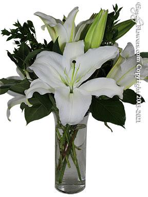 Fragrant White Siberia Lilies