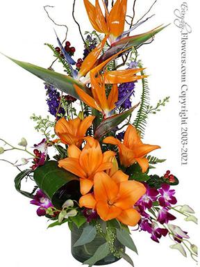 Sunset Birds Of Paradise Tropical Flowers Avante Gardens