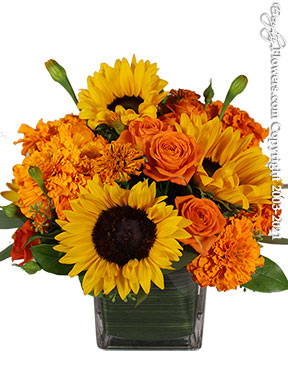Magnificent Marigolds Local Flower Delivery by Avante Gardens