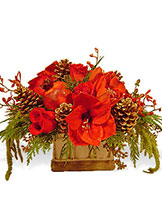 Christmas Pave Centerpiece Avante Gardens by Everyday Flowers