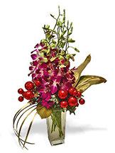 Bright Holiday Orchids Avante Gardens by Everyday Flowers