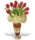 Graceful Christmas Tulips