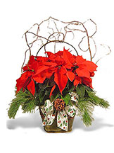 Red Poinsettia Avante Gardens by Everyday Flowers