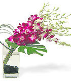 Contemporary Orchid Vase